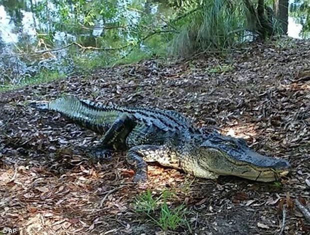 Mỹ: Người phụ nữ bị cá sấu cắn chết trước mặt nhiều người khi cố cứu chó cưng - Ảnh 2.