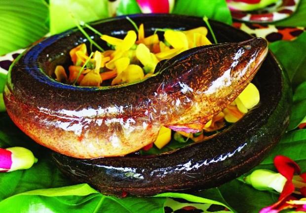 Nhiều người ăn thịt lươn mà không biết rằng nó là sâm động vật - trong Đông y là thuốc quý như vàng nhờ những công dụng này - Ảnh 2.