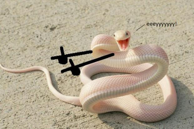 Vẽ rắn thêm chân quả là ngớ ngẩn nhưng vẽ rắn thêm tay lại hay biết mấy - Ảnh 3.