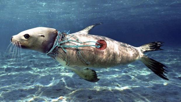 Bộ ảnh cho thấy con người đã và đang đối xử tệ bạc như thế nào với đại dương - Ảnh 1.