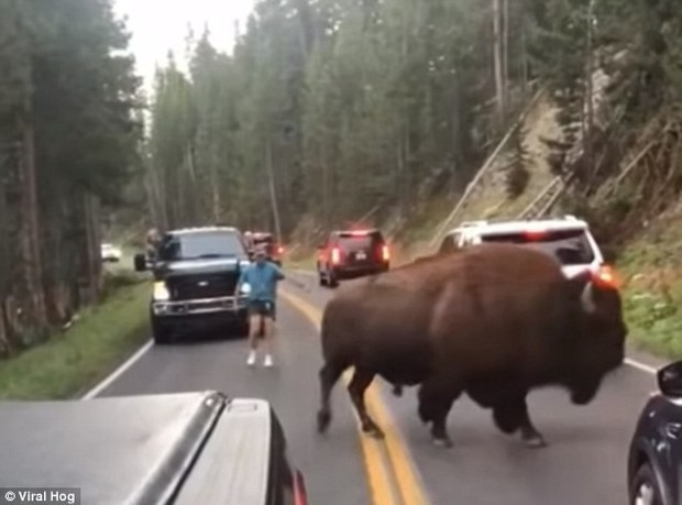 Mỹ: Thanh niên nghịch dại trêu bò rừng để rồi bị húc sấp mặt trong công viên quốc gia - Ảnh 2.