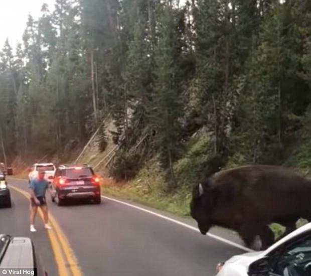 Mỹ: Thanh niên nghịch dại trêu bò rừng để rồi bị húc sấp mặt trong công viên quốc gia - Ảnh 3.