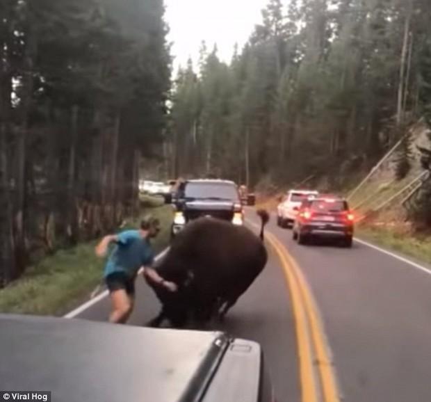 Mỹ: Thanh niên nghịch dại trêu bò rừng để rồi bị húc sấp mặt trong công viên quốc gia - Ảnh 5.
