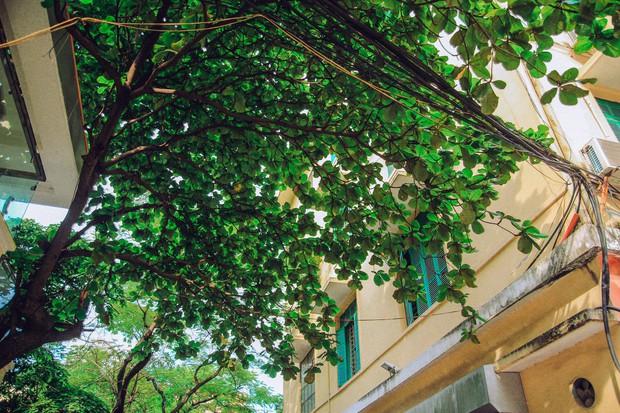 Ở Hà Nội có 1 ngôi trường mà đến cái thùng rác cũng là 1 góc sống ảo so deep - Ảnh 10.