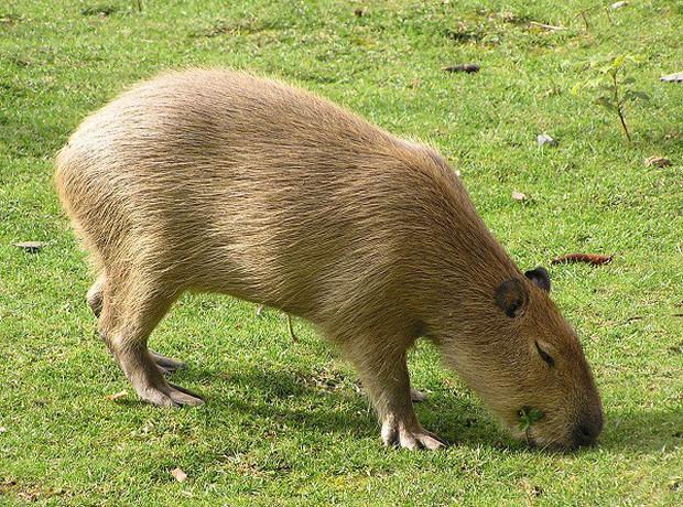 Cười vỡ ruột trước thói quen đi vệ sinh khó đỡ của các loài động vật - Ảnh 6.