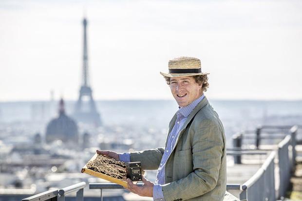 Vì sao người Paris nuôi ong lấy mật trên mái vòm những tòa nhà đông khách nhất thành phố này? - Ảnh 1.