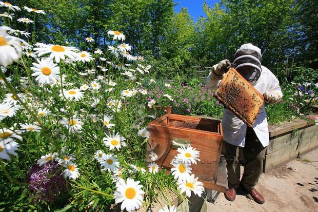 Vì sao người Paris nuôi ong lấy mật trên mái vòm những tòa nhà đông khách nhất thành phố này? - Ảnh 5.