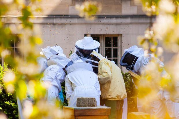 Vì sao người Paris nuôi ong lấy mật trên mái vòm những tòa nhà đông khách nhất thành phố này? - Ảnh 6.
