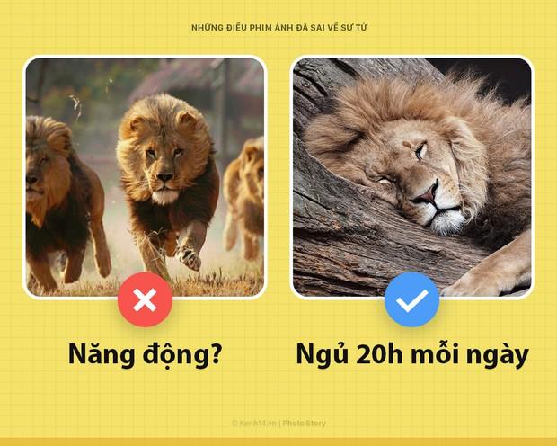 Chào! Tôi là sư tử và phim ảnh của loài người các ông làm sai hết cả rồi - Ảnh 4.