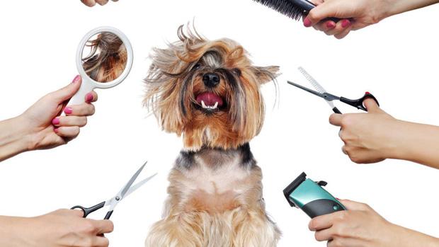 Mùa hè có nóng thế nào cũng không nên cạo sạch lông cho boss chó nhà bạn và đây là lý do - Ảnh 1.