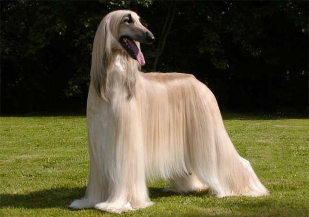 Mùa hè có nóng thế nào cũng không nên cạo sạch lông cho boss chó nhà bạn và đây là lý do - Ảnh 3.