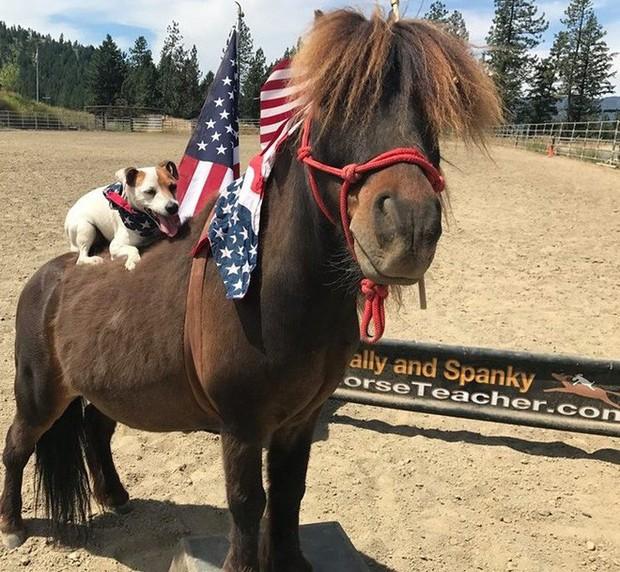 Chuyện lạ: Chú chó có biệt tài cưỡi ngựa không cần dây cương, điều khiển ngựa giỏi như con người - Ảnh 3.