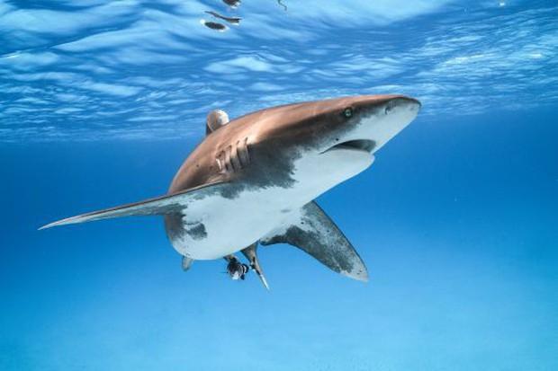 Ai Cập: Đi bơi ở vùng biển có cảnh báo nguy hiểm, nam du khách bị cá mập cắn chết - Ảnh 1.