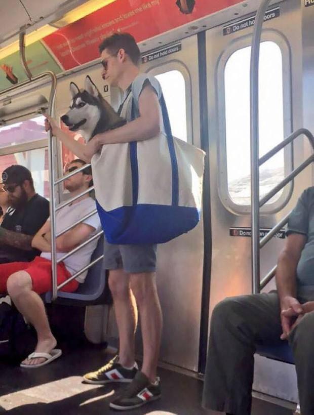 Những hình ảnh hài hước chỉ có trên tàu điện ngầm: Từ chị gái thái rau tới Pikachu thò tay ôm cột - Ảnh 5.