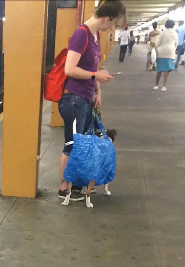 Những hình ảnh hài hước chỉ có trên tàu điện ngầm: Từ chị gái thái rau tới Pikachu thò tay ôm cột - Ảnh 29.