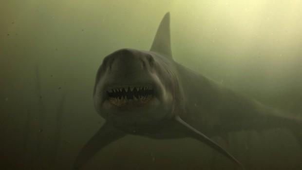 8 lần khoe nanh của lũ cá mập trên màn ảnh khiến người xem lạnh cả gáy - Ảnh 5.