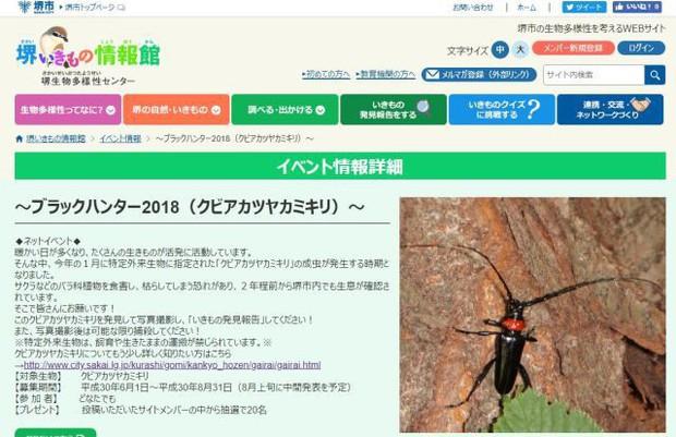 Nhật Bản kêu gọi người dân diệt xén tóc cứu hoa anh đào với giá 100.000 đồng/con - Ảnh 2.