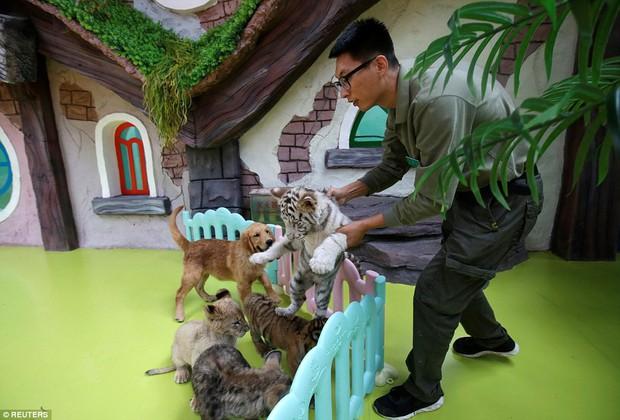 Góc bỉm sữa: Khi hổ, sư tử, linh cẩu đều chung sống dưới một mái nhà của mẹ chó bất đắc dĩ - Ảnh 1.