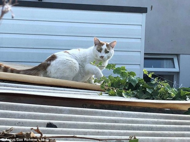 Siêu trộm mèo chuyên lấy... đồ lót từ nhà hàng xóm về tặng chủ - Ảnh 1.