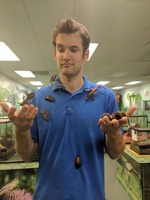 Viện bảo tàng bị trộm mất hơn 7.000 loài côn trùng và nhện kinh dị nhất, và lý do đằng sau thật bất ngờ - Ảnh 2.
