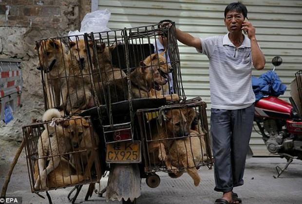 Chỉ vận động, không cấm kinh doanh thịt chó   - Ảnh 1.