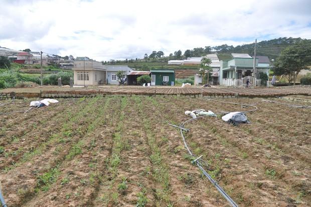 Hàng trăm hộ dân ở Đà Lạt bỏ hoang vườn tược vì nguồn nước bị ô nhiễm từ chợ nông sản - Ảnh 7.