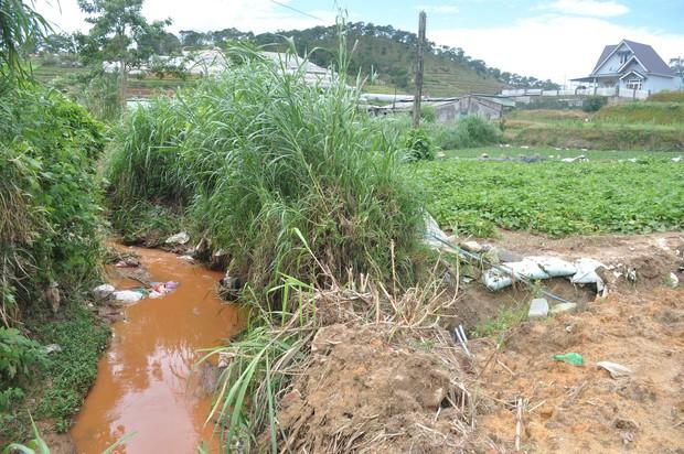 Hàng trăm hộ dân ở Đà Lạt bỏ hoang vườn tược vì nguồn nước bị ô nhiễm từ chợ nông sản - Ảnh 5.