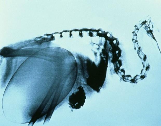 Loài chim kỳ lạ này tuy bé nhỏ nhưng đẻ trứng thì thuộc loại to nhất thế giới - Trò đùa của tạo hóa ư? - Ảnh 1.