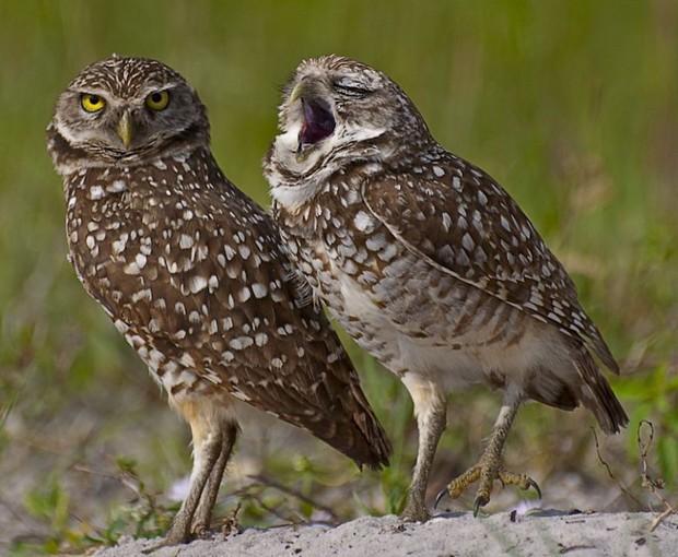 """Cười ra nước mắt với loạt khoảnh khắc khó đỡ của thế giới động vật trong cuộc thi """"Thiên nhiên hài hước 2018"""" - Ảnh 12."""