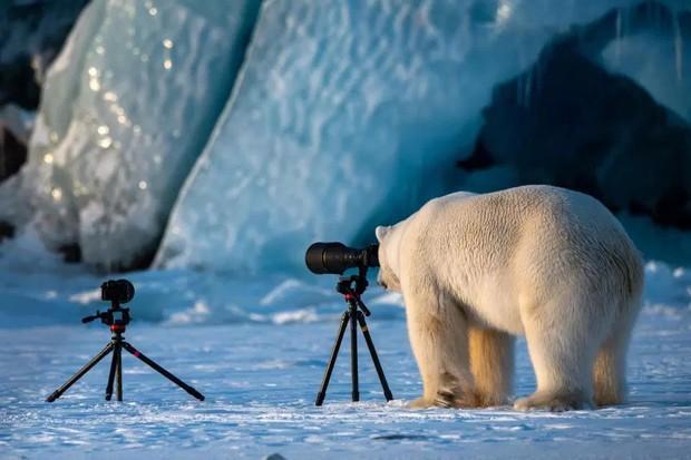"""Cười ra nước mắt với loạt khoảnh khắc khó đỡ của thế giới động vật trong cuộc thi """"Thiên nhiên hài hước 2018"""" - Ảnh 6."""