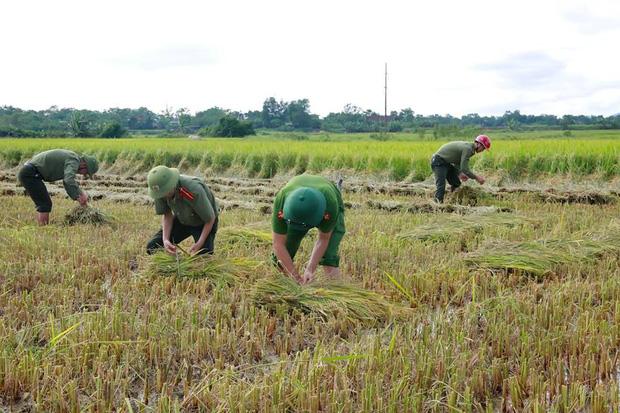 """Công an giúp người dân di dời nhà cửa, gặt lúa """"chạy"""" bão Mangkhut - Ảnh 3."""