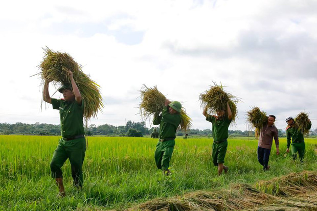 """Công an giúp người dân di dời nhà cửa, gặt lúa """"chạy"""" bão Mangkhut - Ảnh 4."""