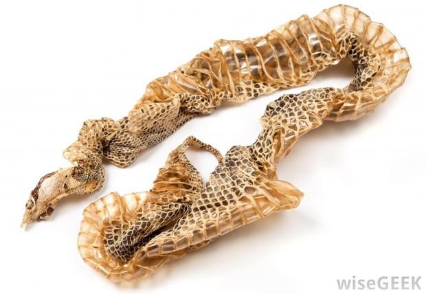 Vừa sướng mắt, vừa rợn người trước màn giúp rắn lột xác bằng tay của thanh niên bạo gan - Ảnh 2.