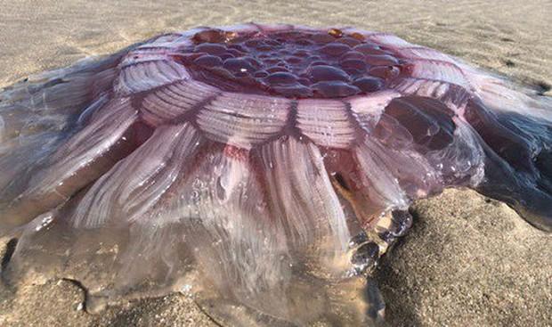 New Zealand: Tranh cãi 'vật thể lạ' là sứa khổng lồ hay sinh vật ngoài hành tinh - Ảnh 1.