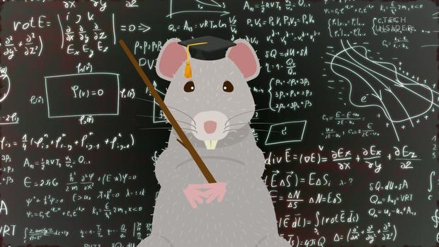 Tại sao sau cả ngàn năm cố gắng, loài người vẫn không thể diệt hết chuột trong các thành phố? - Ảnh 1.