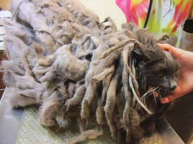 Góc ấm lòng: Nhân viên trạm cứu trợ động vật nhận được nùi giẻ lông lá gửi tới tận cửa, sau khi cạo sạch mới phát hiện ra đó là chú mèo xinh xắn - Ảnh 2.
