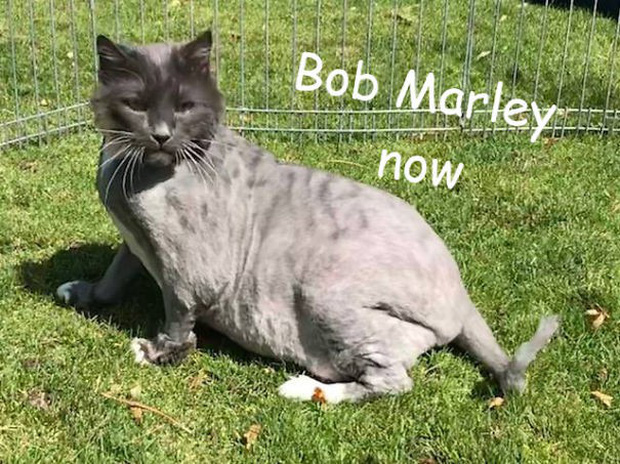 Góc ấm lòng: Nhân viên trạm cứu trợ động vật nhận được nùi giẻ lông lá gửi tới tận cửa, sau khi cạo sạch mới phát hiện ra đó là chú mèo xinh xắn - Ảnh 6.