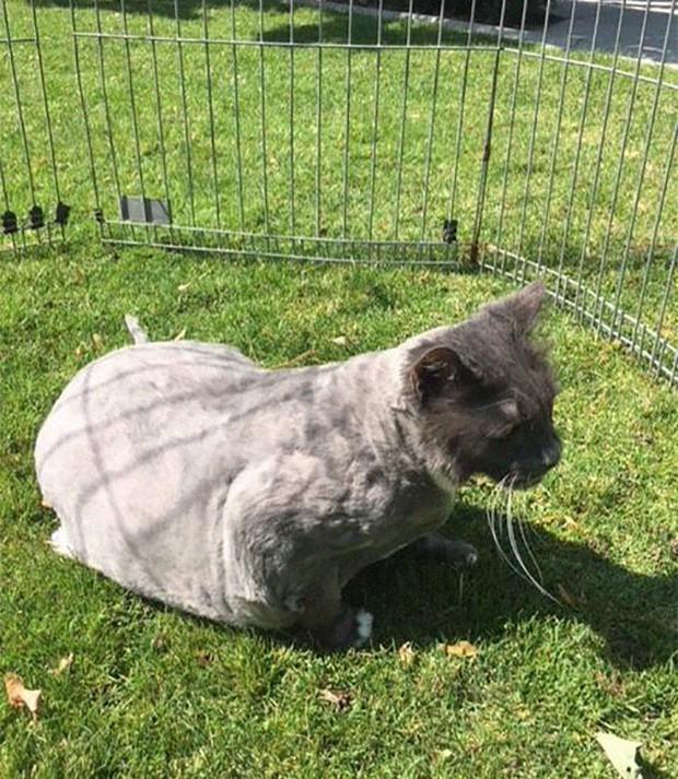 Góc ấm lòng: Nhân viên trạm cứu trợ động vật nhận được nùi giẻ lông lá gửi tới tận cửa, sau khi cạo sạch mới phát hiện ra đó là chú mèo xinh xắn - Ảnh 7.