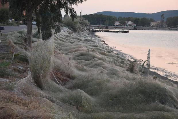 Bờ biển Hy Lạp bị mạng nhện khổng lồ bao phủ, dân mạng bấn loạn đòi đốt sạch trước khi lũ nhện sinh sôi nảy nở - Ảnh 1.