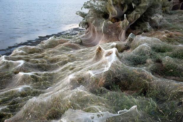 Bờ biển Hy Lạp bị mạng nhện khổng lồ bao phủ, dân mạng bấn loạn đòi đốt sạch trước khi lũ nhện sinh sôi nảy nở - Ảnh 5.