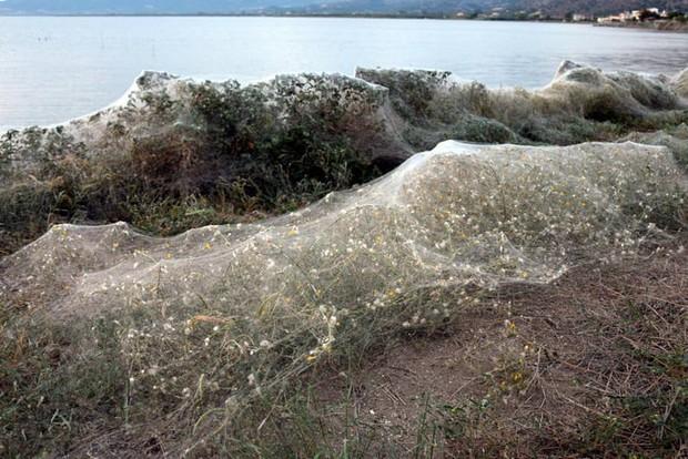 Bờ biển Hy Lạp bị mạng nhện khổng lồ bao phủ, dân mạng bấn loạn đòi đốt sạch trước khi lũ nhện sinh sôi nảy nở - Ảnh 6.