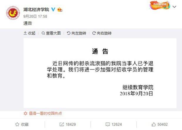 Trung Quốc: Sinh viên dùng cung tên bắn chết mèo, cả trường phẫn nộ đòi đuổi học - Ảnh 3.