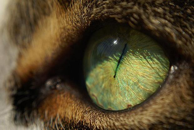 Đố bạn biết đây là mắt của con gì? Đáp án sẽ khiến bạn không tin nổi vào mắt mình - Ảnh 5.