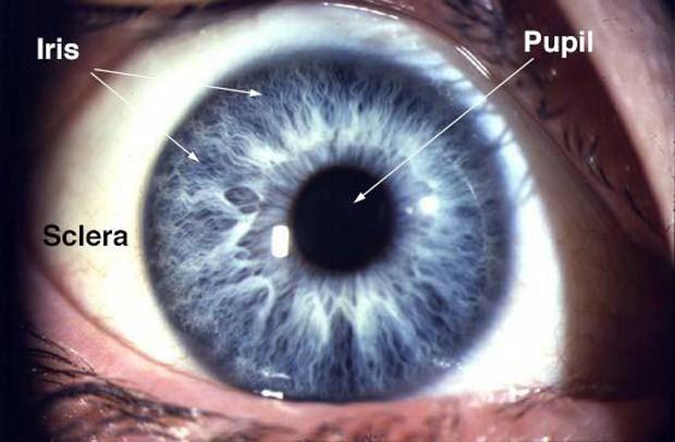 Đố bạn biết đây là mắt của con gì? Đáp án sẽ khiến bạn không tin nổi vào mắt mình - Ảnh 4.