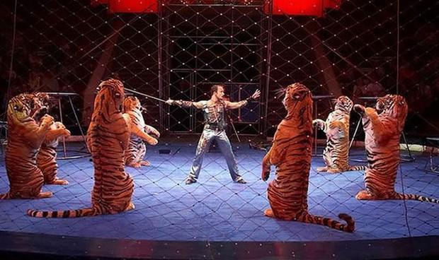 Hổ cái ngã quỵ trong rạp xiếc ở Nga, bị người huấn luyện túm đuôi kéo đi lý do ai nghe xong cũng bất ngờ - Ảnh 4.
