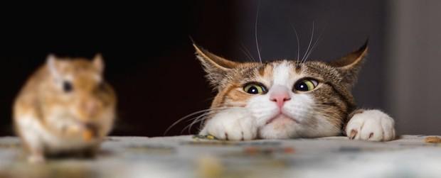 Hóa ra không phải cứ nuôi mèo là bớt chuột - nghịch lý này đã được khoa học chứng minh hẳn hoi - Ảnh 1.