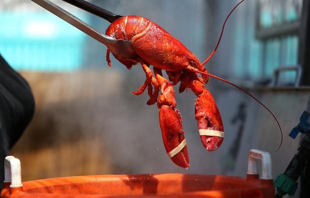Lý do tại sao tôm hùm Mỹ lại trở thành một trong những món ăn sang chảnh nhất thế giới - Ảnh 3.