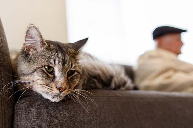 Mèo cũng sẽ bị stress và đây là nguyên nhân - Ảnh 3.