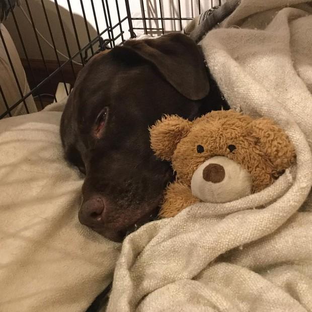 Thời khắc cuối cùng của thú cưng và những điều mọi chủ nuôi cần biết theo chia sẻ của các bác sĩ thú y - Ảnh 2.