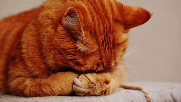 Mèo cũng sẽ bị stress và đây là nguyên nhân - Ảnh 1.